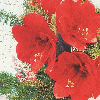 Napkins 25x25 cm - Red Amaryllis