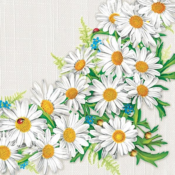 Tovaglioli 33x33 cm - Daisy Frame