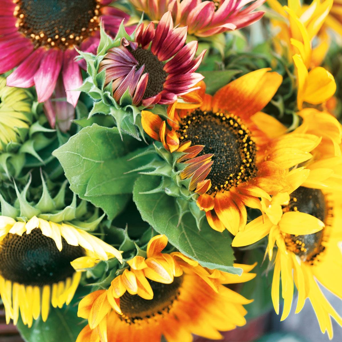 Servilletas 33x33 cm - Sunflower Bouquet