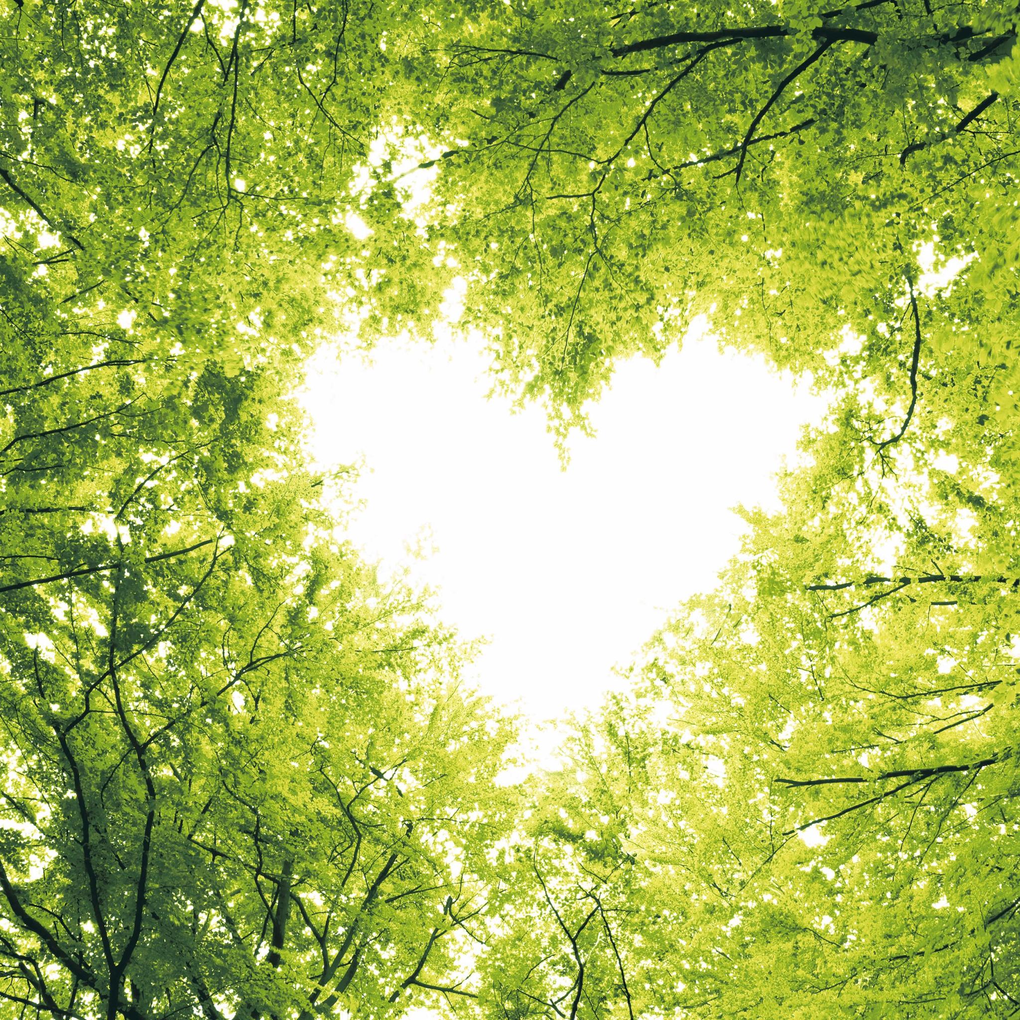 Serviettes 24x24 cm - Nature love