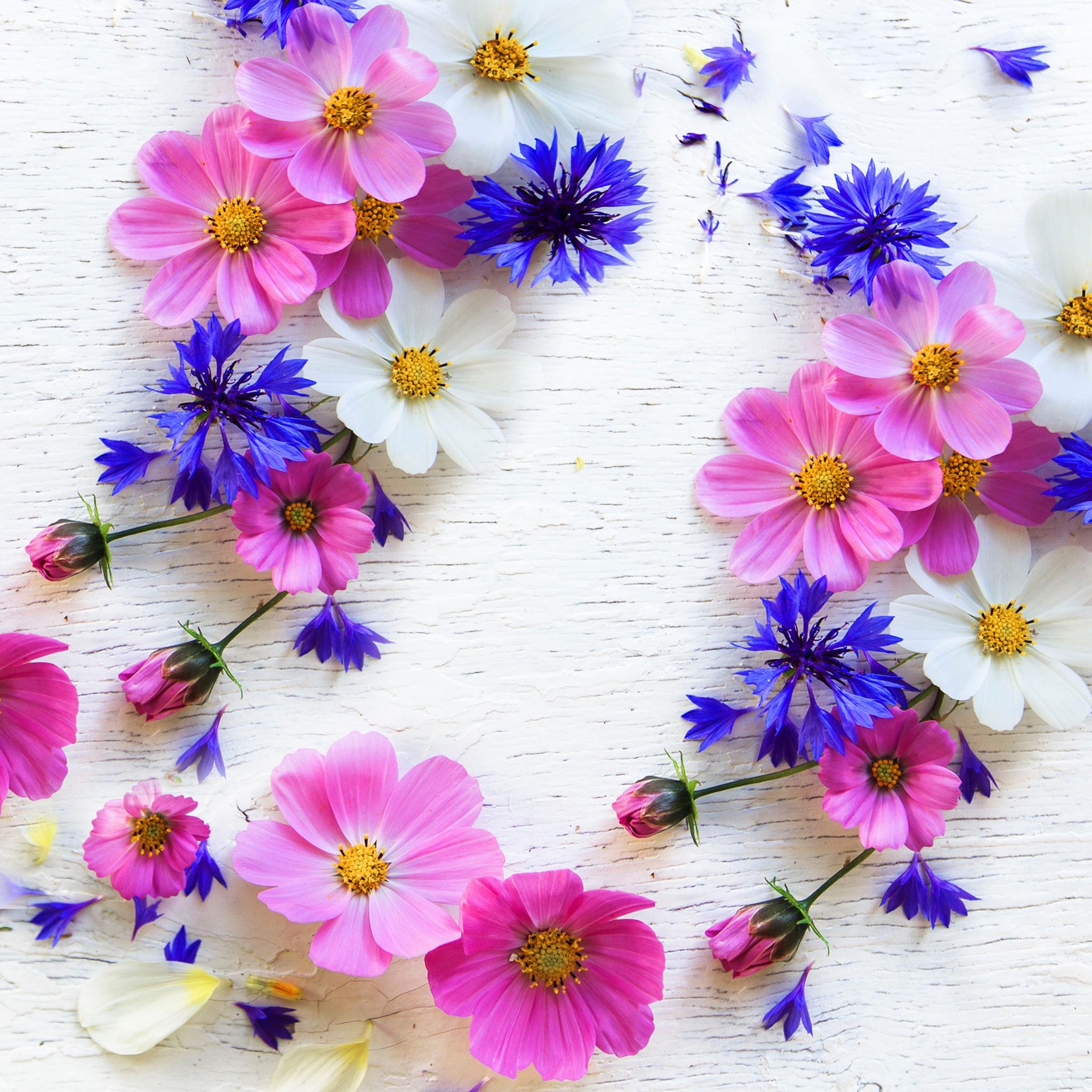 Serviettes 24x24 cm - Summer florals