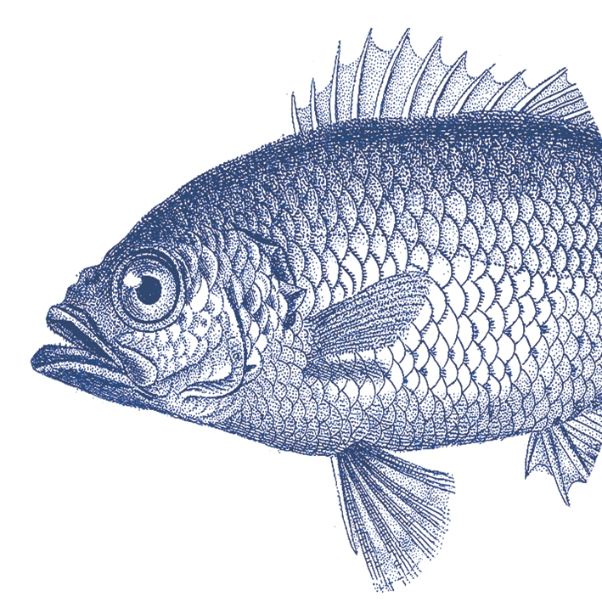 Serwetki 33x33 cm - Fish marine 33x33cm