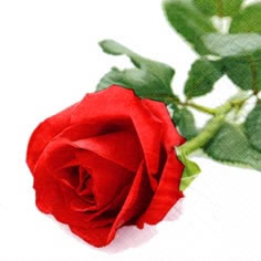 Napkins 24x24 cm - Rosa Nobile
