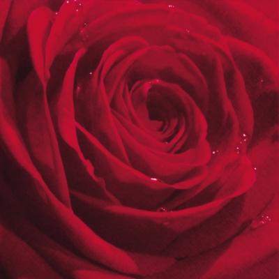 Servilletas 33x33 cm - Belle Rose du Matin red