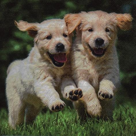 Napkins 33x33 cm - Happy Puppies