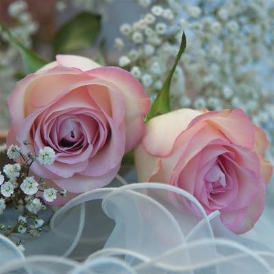 Serviettes 33x33 cm - Ambiance Romantique
