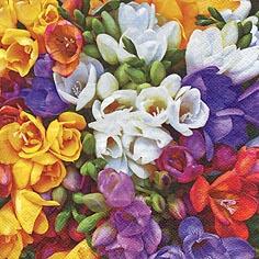 Serwetki 33x33 cm - Variety of Freesias